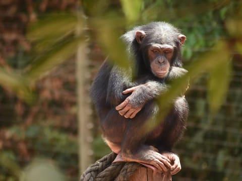 Jane Goodall: nincs sok időnk   ClimeNews - Hírportál