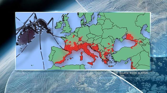 Trópusi betegségek ütötték fel fejüket Európában a klímaváltozás miatt | ClimeNews
