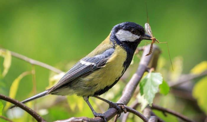 A madarak számának csökkenése összefüggésben van a tömeges rovarpusztulással! | ClimeNews