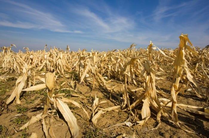 Mit tartogat a jövő az Európai mezőgazdaság számára? | ClimeNews