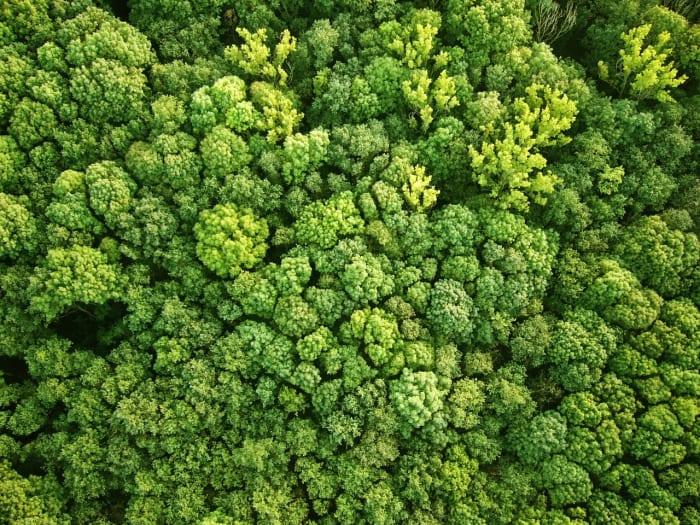 Megérkeztek a világűrből az erdőfelmérés első adatai | ClimeNews - Hírportál