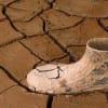 Globális Kockázatok jelentés 2021 | ClimeNews - Hírportál