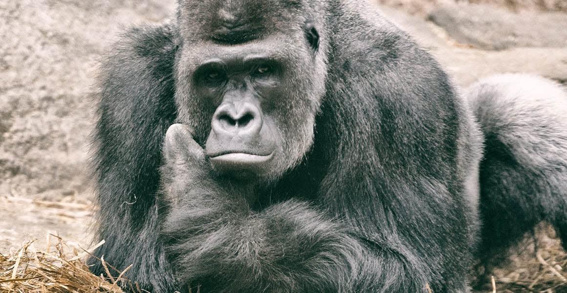 Miért pusztítja el magát az emberiség? | ClimeNews - Hírportál