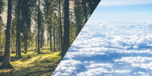 A civilizációnak már vakvágány a faültetés! | ClimeNews - Hírportál
