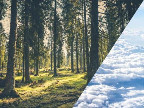 A civilizációnak már vakvágány a faültetés!   ClimeNews - Hírportál