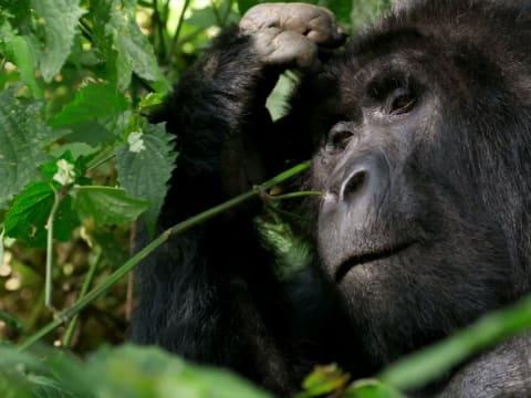 David Attenborough: Élet a Bolygónkon   Hivatalos Előzetes   ClimeNew