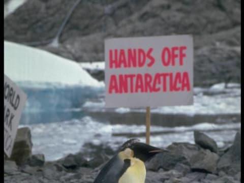 Győzelem! Levonul a Shell az Északi-sarkvidékről - ClimeNews - Emperor penguin