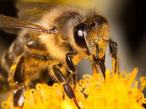 Méheken felhalmozódó mikroműanyagok | ClimeNews
