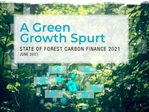 2016 óta megduplázódott az erdei szén-dioxid finanszírozása