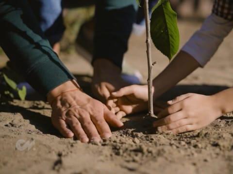 Faültetés és a szén-dioxid eltávolítása: Erdők