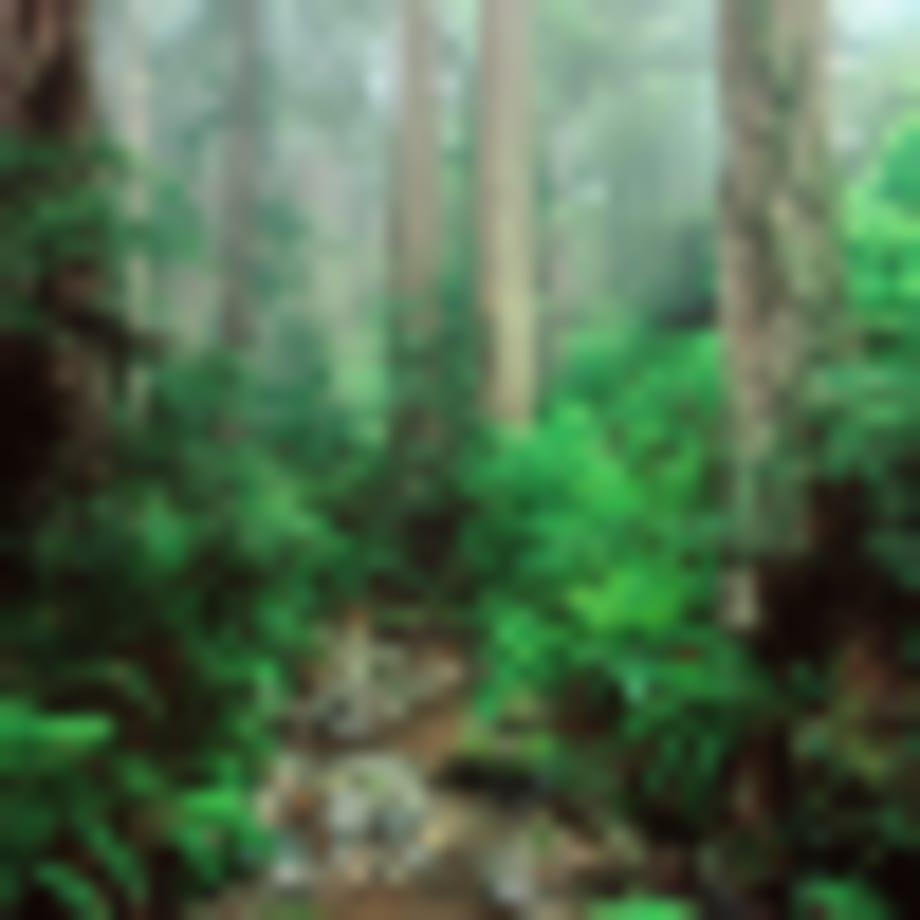 A jövő üzlete a háborítatlan erdő