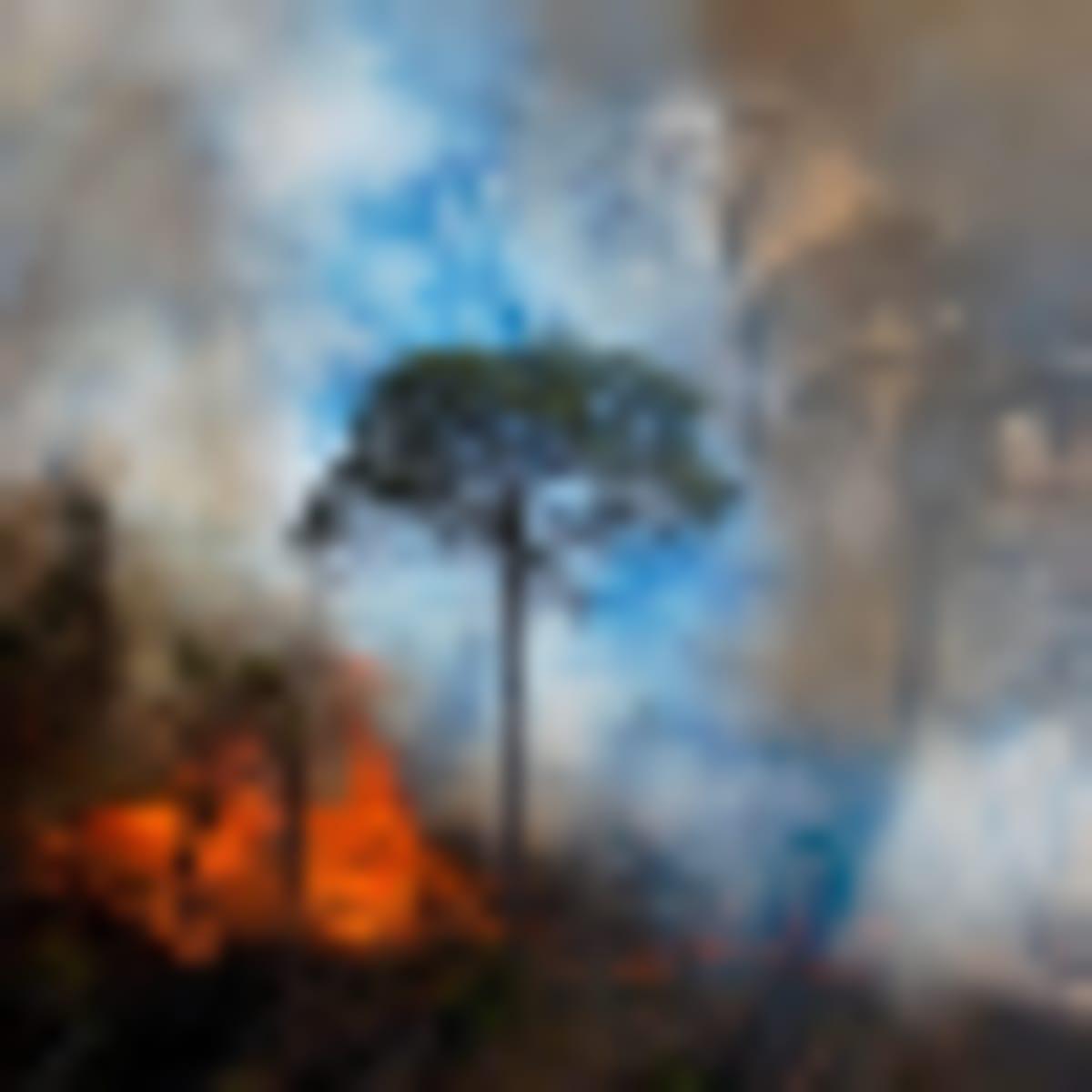 Folyamatban az ökoszisztéma pusztításának bűncselekménnyé nyilvánítása