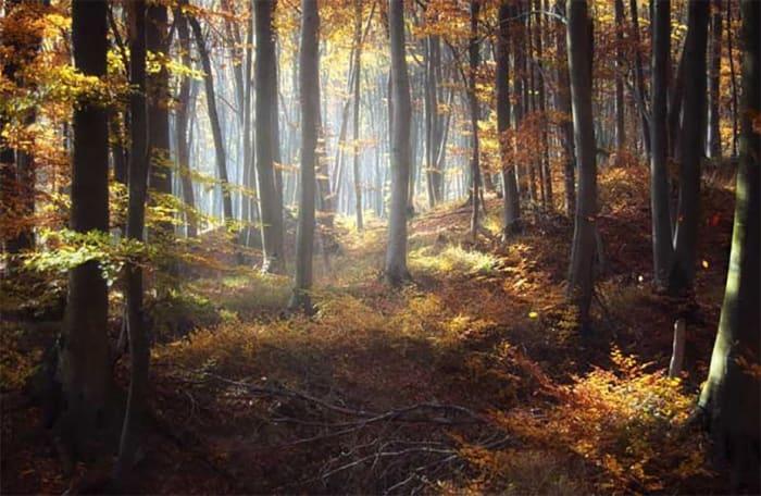 Alaptörvény-ellenes az erdőtörvény 2017-es módosítása   ClimeNews
