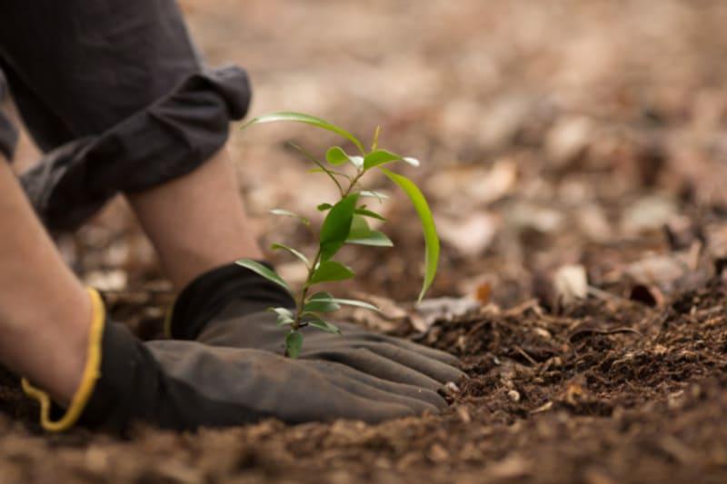 Faültetéssel hazudják, hogy karbonsemleges   ClimeNews - Hírportál
