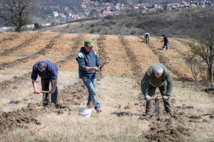 Ötszázötven hektár erdőt telepített a Pilisi Parkerdő   ClimeNews