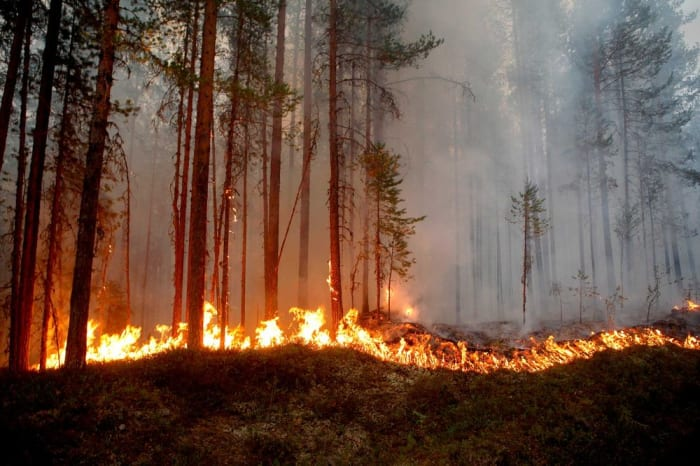 A wildfire burns in Karbole, Sweden, on July 15, 2018. Photographer: Mats Andersson/AFP/Getty Images   ClimeNews - Hírportál