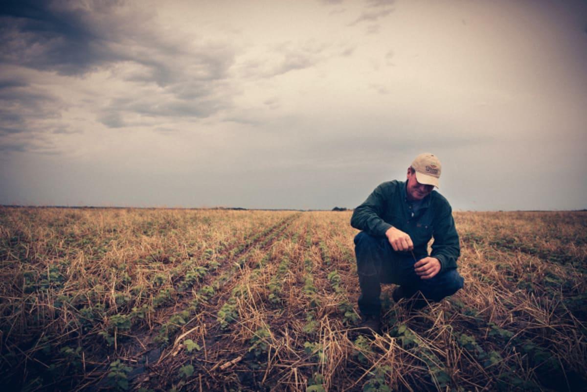 A farmer lábnyoma - Regeneráció: A kezdés   ClimeNews