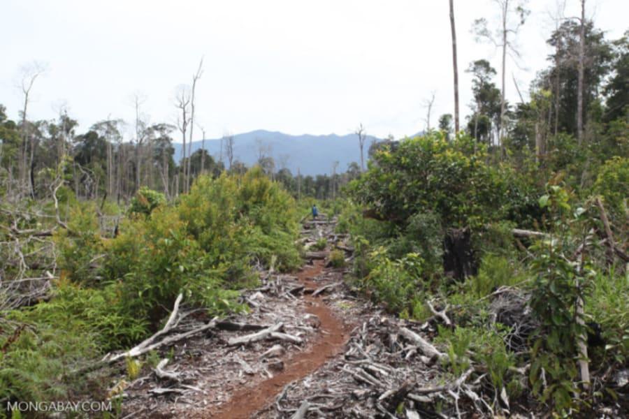 Az Amazonas a végső ponton van | ClimeNews - Hírportál