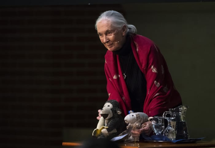 Jane Goodall: nyomorúságos állapotban van a Föld, de most még van esélyünk változtatni   ClimeNews
