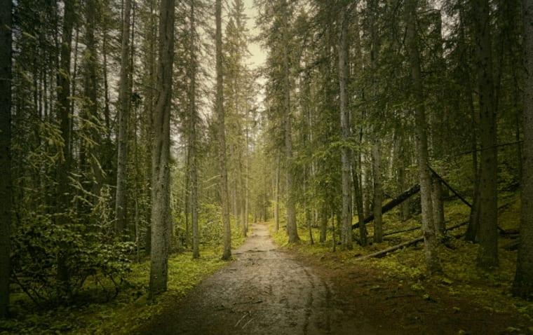 Közel sincs annyi erdő Magyarországon, mint gondolnánk