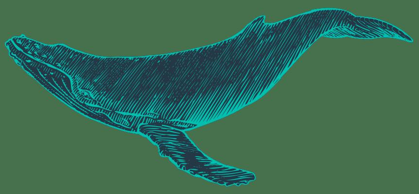 Hogyan változtatják meg a bálnák az éghajlatot - ClimeNews - Hírportál