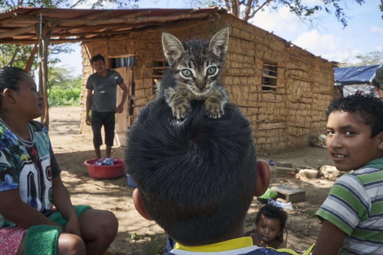 Gente y gato
