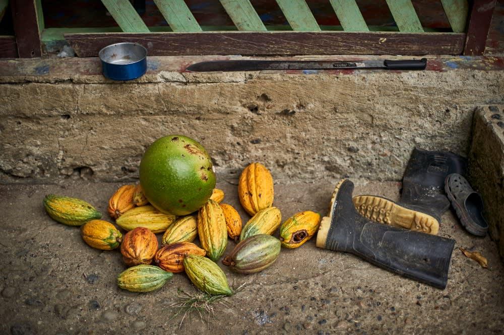 Cacao y totumo