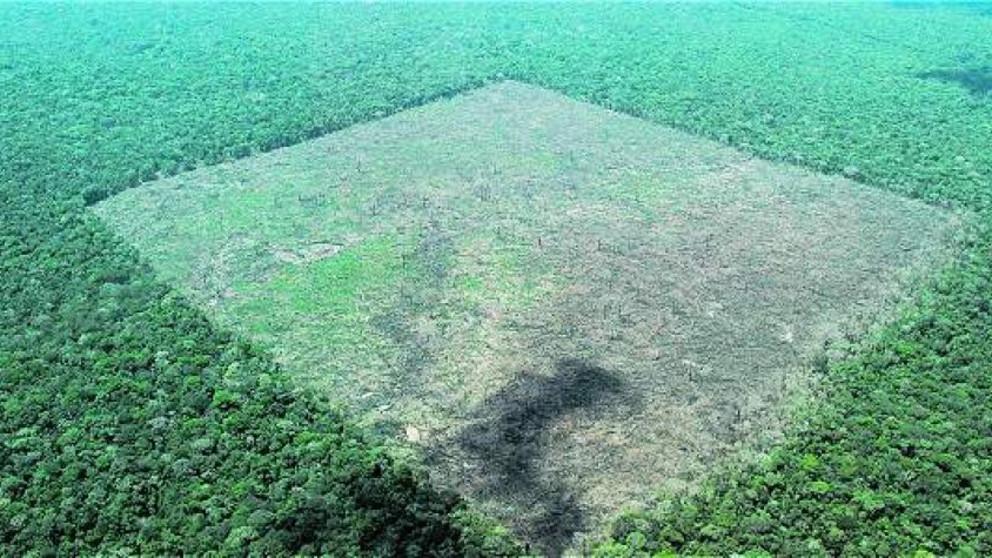 Recorre las zonas más deforestadas del país