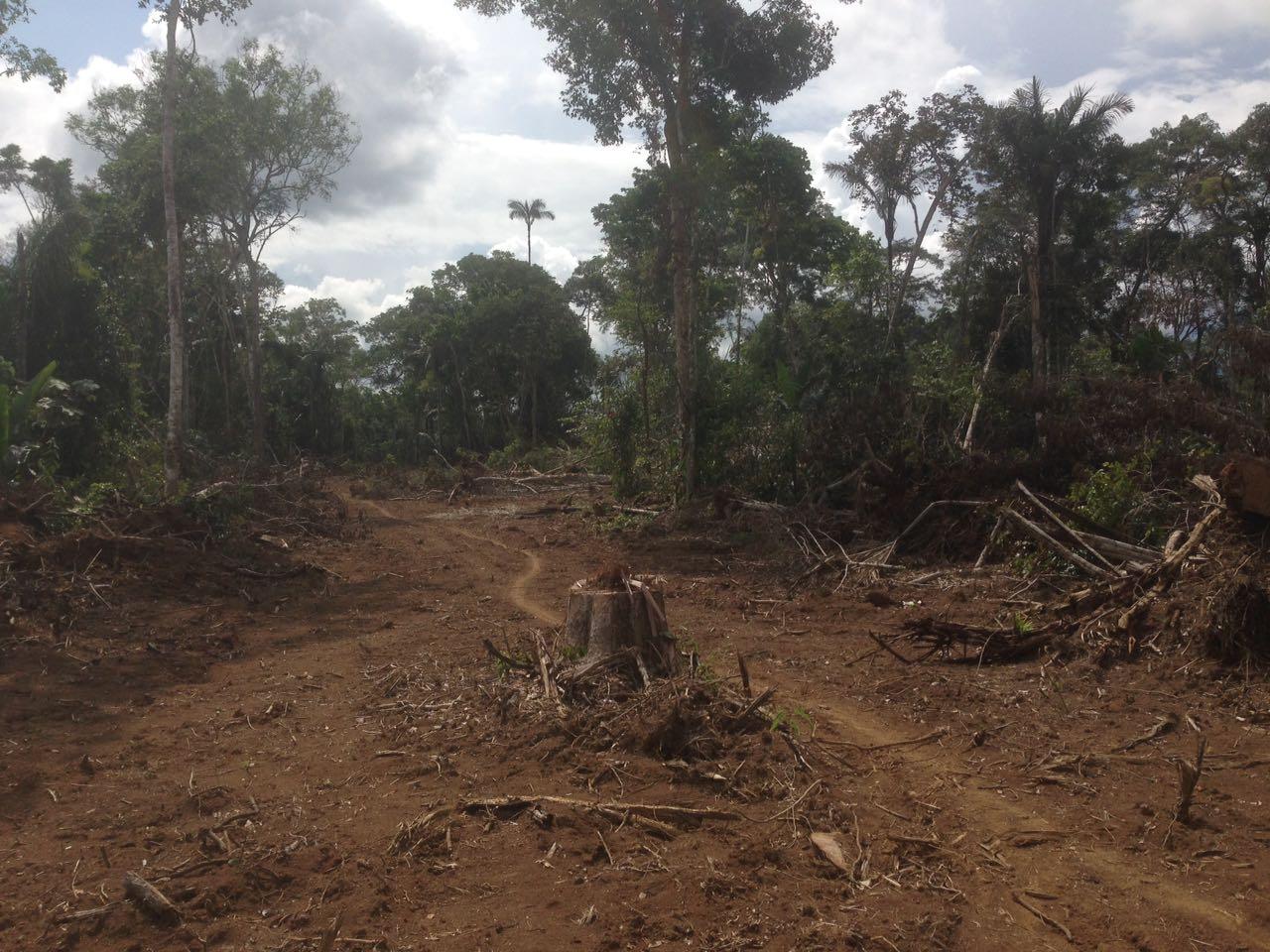 El posacuerdo le está quitando árboles al Amazonas