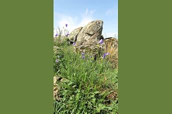 Fleurs et rochers sur le plateau, la randonnée se termine bientôt
