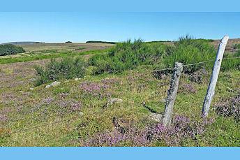 Paysage d'Aubrac près du Col de Bonnecombe