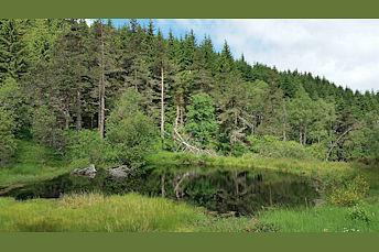 Lac noir dans la forêt sur le retour