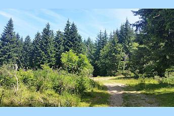 Dans la forêt calme et ombragée