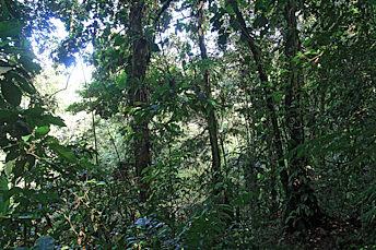 Dans la forêt de la pluie