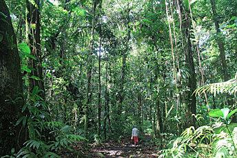 Nous progressons dans la forêt humide