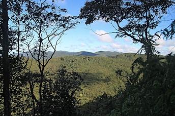 Une jolie vue se dégage à travers la forêt