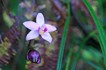 Une orchidée de toute beauté