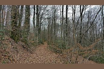 Un tapis de feuilles mortes