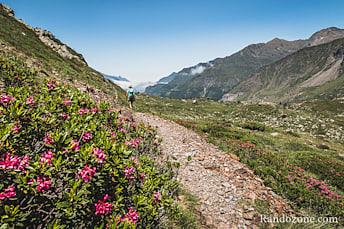 En plus, les rhododendrons sont en fleurs