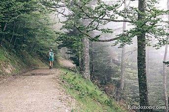 Piste dans la forêt et le brouillard