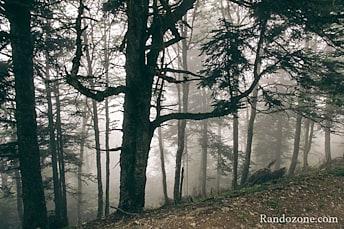 Les arbres ressemblent à des fantômes
