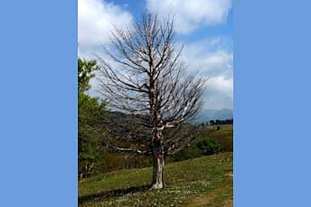 Silhouette d'un arbre mort