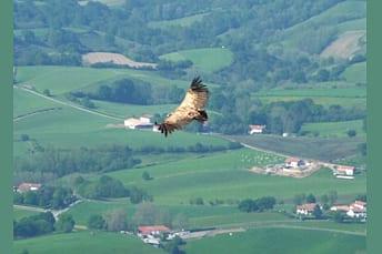 Des vautours partout