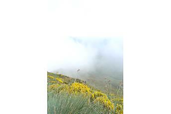 Au sommet du Puy Mary par temps brumeux