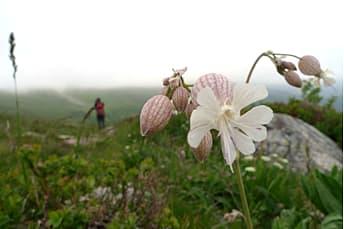 Randonnée Puy Mary, volcan d'Auvergne