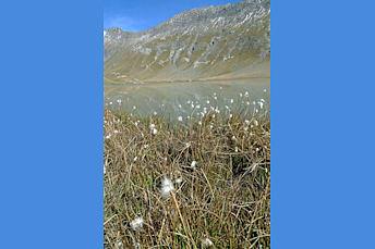 Lac du Goléon et champs de linaigrettes