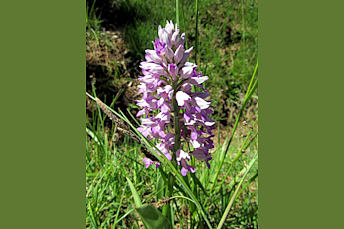 Fleur près de Souyri en Aveyron