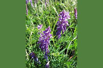 Fleur en Aveyron