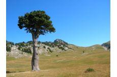 Réserve naturelle des Hauts plateaux du Vercors