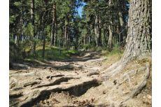 4 randonnées au départ de Saint-Alban-sur-Limagnole